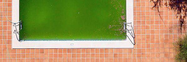 Pool wasser grün was tun