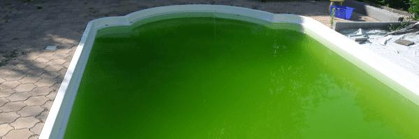 Poolwasser grün? So wirds Wasser wieder klar | aussenpool de